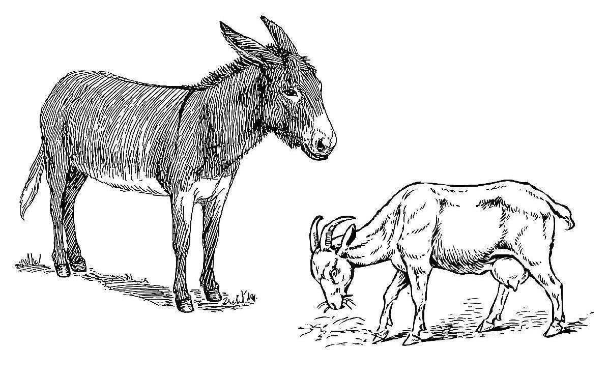 Deutschland Lese Der Esel Und Die Ziege